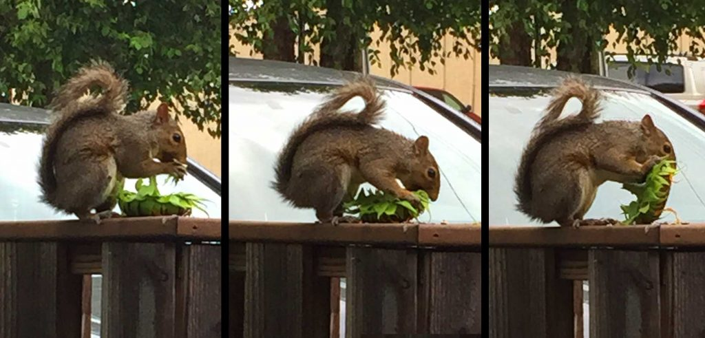 How do you deal with squirrels?